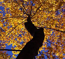 Fall Majesty by Tibby Steedly