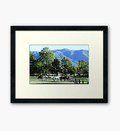 Mountain Horses Framed Print