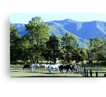 Mountain Horses Canvas Print