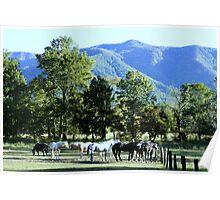 Mountain Horses Poster