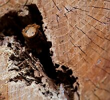 A Wooden Crack by Wealie