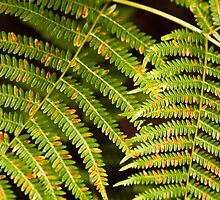 Colourful Ferns by Wealie