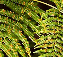 Colourful Ferns by Wealie