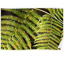 Colourful Ferns Poster