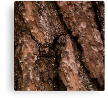 Red Bark Detail Canvas Print