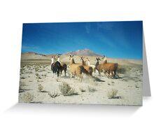 Llamas - Salar de Uyuni Greeting Card