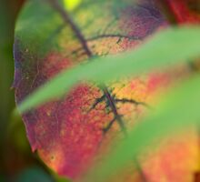 Multicoloured Leaf by Wealie