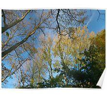 Autumn Composition Poster