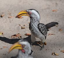 Yellow-billed hornbill by AndyKanzi