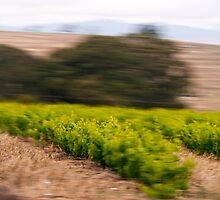 Fast Fields by Brandon Dyzel