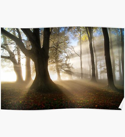 Misty Autumn Woods, Cotswolds, England Poster