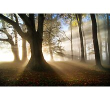 Misty Autumn Woods, Cotswolds, England Photographic Print
