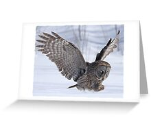 The plight of the great grey owl Greeting Card