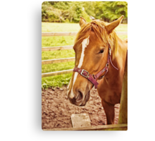 Horse in a Field Canvas Print