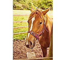 Horse in a Field Photographic Print