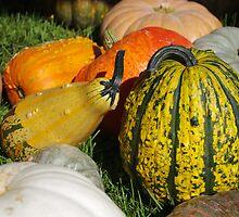 Pumpkin patch 1 by purplefoxphoto