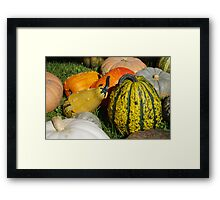 Pumpkin patch 1 Framed Print