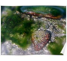 A world Underwater Poster