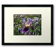 Iris Garden Party Framed Print