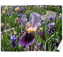 Iris Garden Party Poster