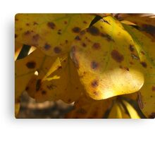 Fall Leaves Series Canvas Print
