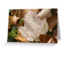 Maple Rain Drops Greeting Card