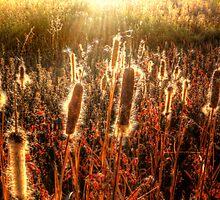 SunFuzz by Bob Larson