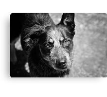 Gundy Dog Expo Canvas Print