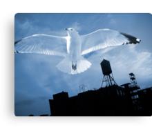 Bird's Flight Canvas Print