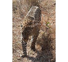 Sabi Sabi - Could you get out of my way please? Photographic Print
