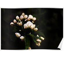 Apple Buds Poster