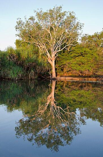 Reflections by David Sundstrom