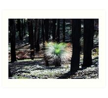 Post February 2009 Bushfires - between Healesville and Kinglake VIC  Art Print