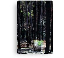 Post February 2009 Bushfires - between Healesville and Kinglake VIC  Canvas Print