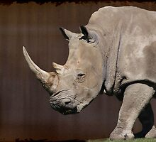 White Rhinoceros by NewfieKeith