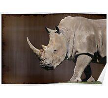 White Rhinoceros Poster