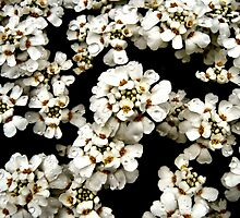 Floral Pattern by Laura Wojtania