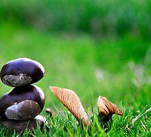 Conker Zen by DavidWPhotog