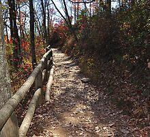 Trail Natural Bridge Area Slade, Kentucky by mltrue