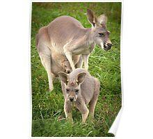 """""""Hop Along"""" - red kangaroos Poster"""