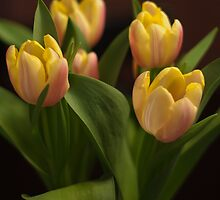 Tulips That Have Opened by JenCarter757