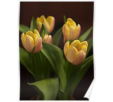 Tulips That Have Opened Poster