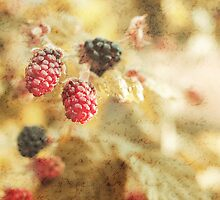 The Last of the Blackberries by BPhotographer