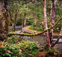Skookumchuck River by Lynnette Peizer