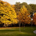 High Park in Fall by aclepsa