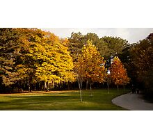 High Park in Fall Photographic Print