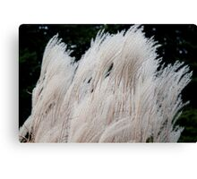 Silver Grass in the Wind Canvas Print