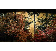 The Glory of Autumn Unfolds Photographic Print