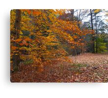 A cozy comforter of leaves Canvas Print