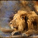 King of the Jungle by liesbeth